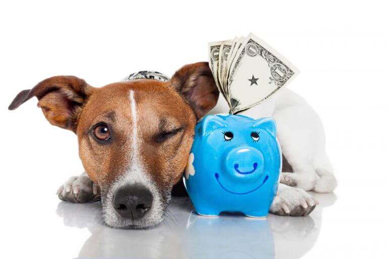 We help you save big on pet expenses