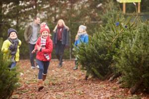 kids and christmas trees